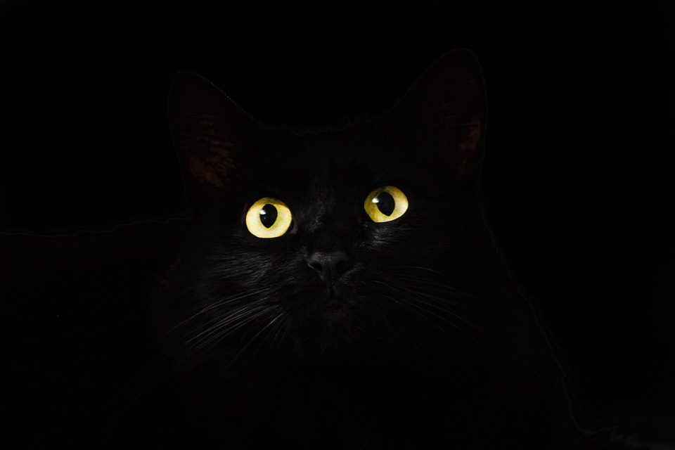 cat-eyes-2944820_960_720